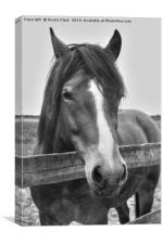 Beautiful horse looking over a fence, Canvas Print