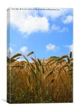 Wheat In The Sun, Canvas Print