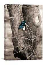 Butterfly Blue, Canvas Print
