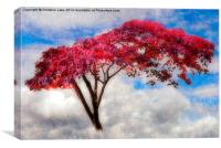 Red Tree in Summer, Canvas Print