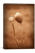 Friends In Seed, Canvas Print