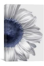 A Touch Of Blue, Canvas Print