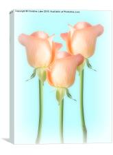 Simply Roses, Canvas Print