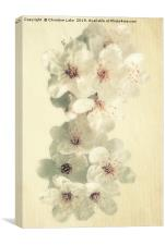 First Blossom, Canvas Print