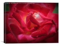 Rose On Fire, Canvas Print