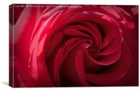 Rose In Red, Canvas Print