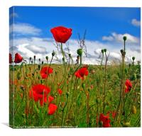 Poppies in Pembrokeshire., Canvas Print