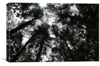 Looking Up, Canvas Print