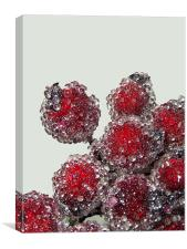 Frosted Berries, Canvas Print