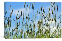 Grass in the Breeze, Canvas Print