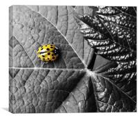 Harlequin Ladybird - Colour Highlight, Canvas Print