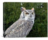 Canadian Great Horned, Canvas Print