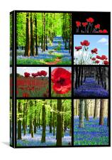 Poppies and Bluebells, Canvas Print