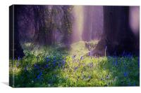 Enchanted Bluebell Woods, Canvas Print