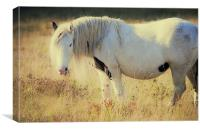 Horse out at Grass, Canvas Print