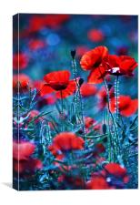 Colourful contrast, Canvas Print