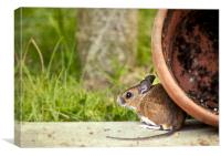 Friendly Woodmouse, Canvas Print