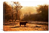 Highland Cattle in Dawn light, Canvas Print