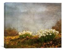 Spring has sprung, Canvas Print