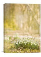 Step into spring, Canvas Print