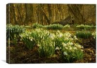 Tiptoe through the snowdrops, Canvas Print