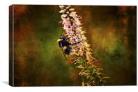 the Bumble Bee, Canvas Print