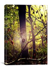 Caught in  Web, Canvas Print
