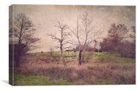 Cows on the Hill , Canvas Print