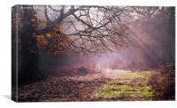 Autumn Light in the Forest, Canvas Print