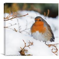 Robin in snow, Canvas Print
