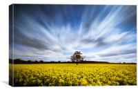 Rape field long exposure, Canvas Print