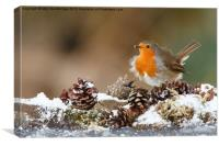 Robin in the snow with fir cones, Canvas Print