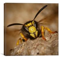 Wasp on paper nest, Canvas Print