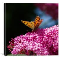 Wall Brown Butterfly on Buddleia, Canvas Print