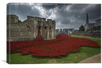 Tower of London Poppies , Canvas Print