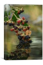 Harvest mouse on brambles with reflection, Canvas Print