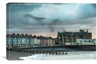 Starling cloud over Aberystwyth, Canvas Print