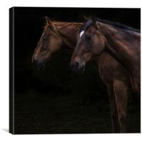 Two horses, Canvas Print