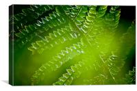 Fern abstract, Canvas Print
