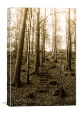 Believers Way, Haldon Woods, Canvas Print
