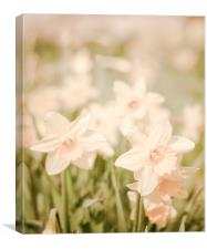 Spring Daffodils flowers, Canvas Print