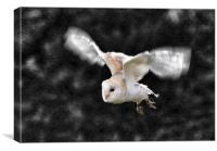Barn Owl in flight, Canvas Print