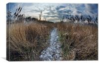 Path through reed bed, Canvas Print