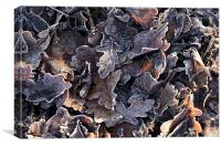 Frosted oak leaves, Canvas Print