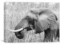 African Elephant eating, Canvas Print