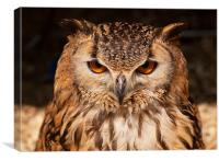 Eagle Owl or Bengal Owl, Canvas Print