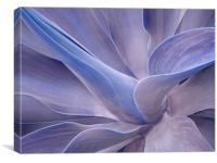 Agave in Shades of Lilac, Canvas Print