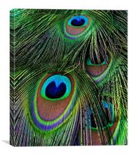 Iridescent Eyes, Canvas Print