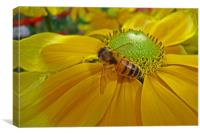 Honey Bee and Dahlia, Canvas Print
