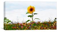 Sunflower Standing Proud, Canvas Print